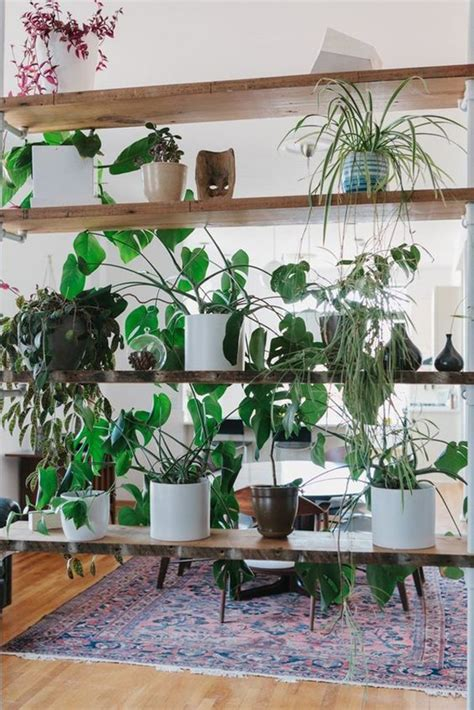 natural plant wall ideas  room dividers house