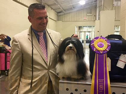 havanese club havanese club of america saturday june 3 2017 canine chronicle