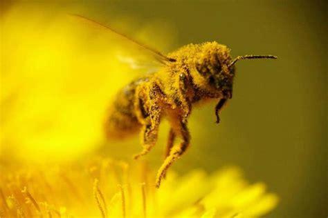 buy honey bees beepods