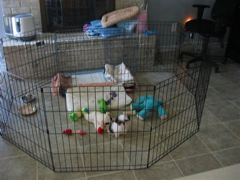 leaving puppy in crate while at work crate a puppy while at work crate potty behavoir the