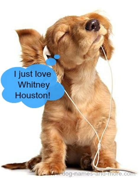 dogs soundtrack popular names after singers and musicians