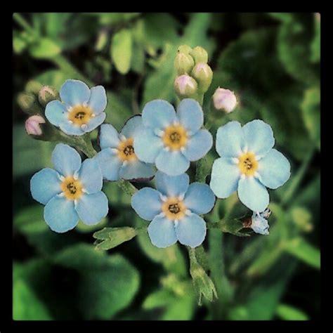 Norway Flowers - pin by glenis zuhlke on flower fancy pinterest