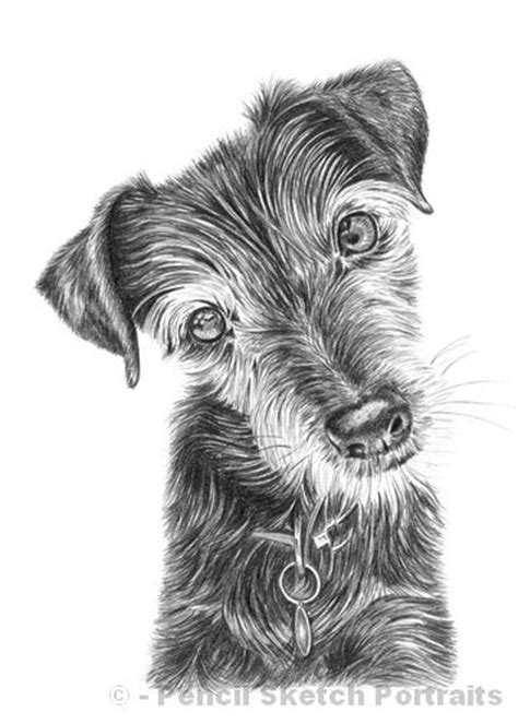 puppies drawings drawings pencil sketches of dogs and puppies for sale