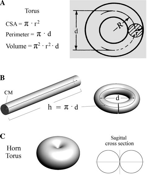formula for cross sectional area of a cylinder volume change of the ocular lens during accommodation