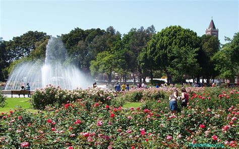 Expo Gardens by Exposition Park Garden