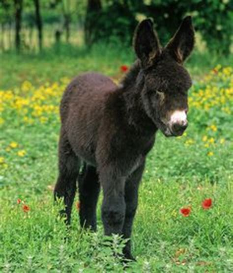 miracle of the century a baby donkey comes out of womb a donkey a day keeps you smiling away on pinterest