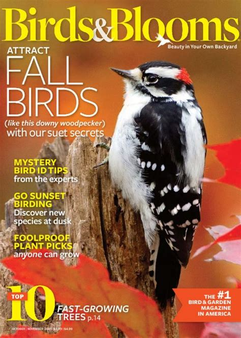 birds blooms magazine subscriptions renewals gifts