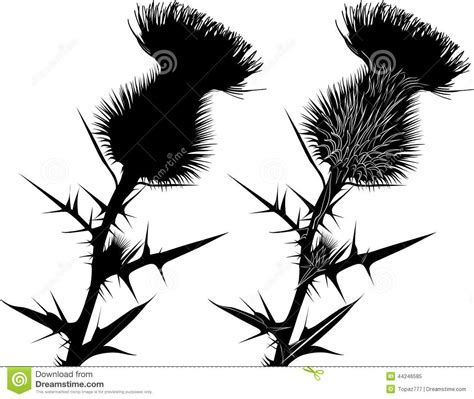 milk thistle thistle flowers stock vector image 44246585