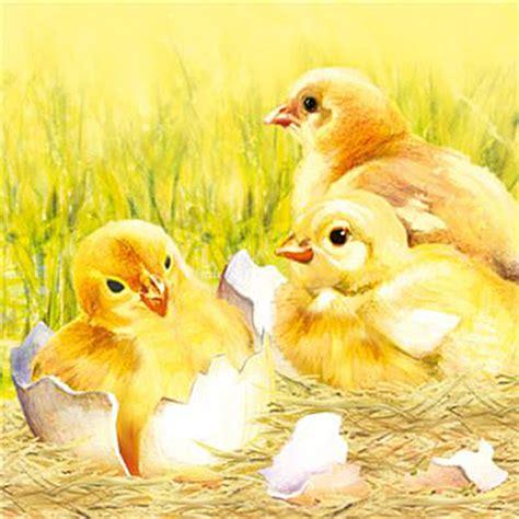 Tovaglioli Di Pasqua by Tovaglioli Di Pasqua Per Decoupage Polli 1 Pz