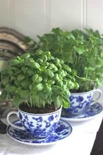 best indoor herb garden indoor herb garden ideas creative juice