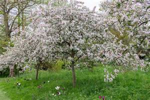 flowering trees in april and may