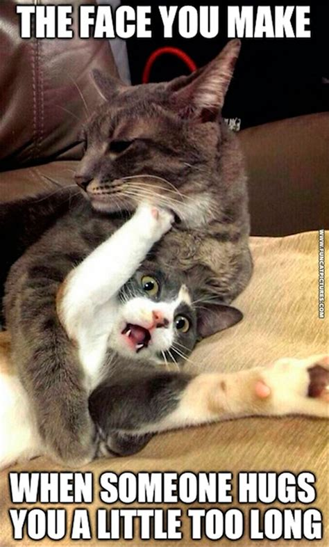 Too Cute Meme Face - cats doesn t like to be hugged too long fun cat pictures