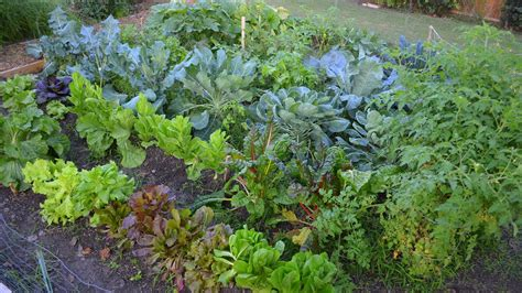 fall vegetables garden growing a fall vegetable garden in the big city