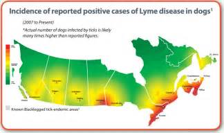 ticks in california map svh summer newsletter smith veterinary hospital