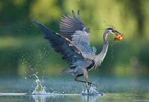 best bird photography by christopher 13 preview