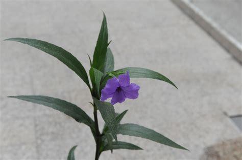 imagenes de flores llamadas violetas una radio en el mar el viejo de las plantas