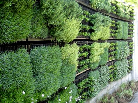 herb wall greenroofs com projects atlanta botanical garden edible
