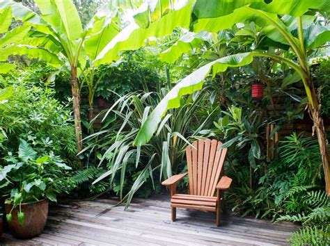 zone 8 tropical plants 14 cold hardy tropical plants to create a tropical garden