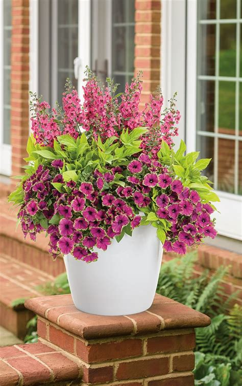 ideas for garden pots 17 best ideas about container gardening on
