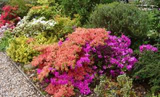 Bushes For Landscaping Low Maintenance Shrubs For Backyard Interior Design Inspiration