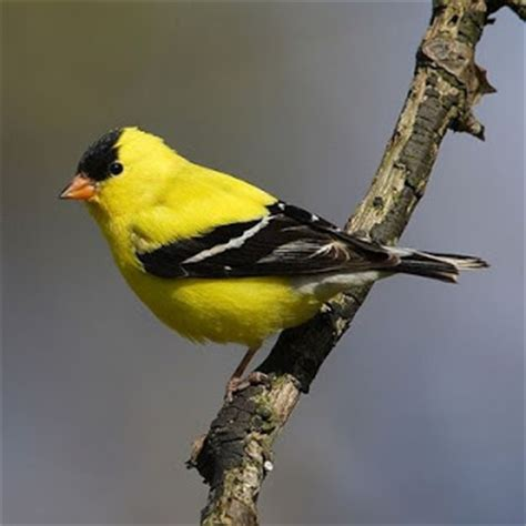 10 most beautiful birds in minnesota