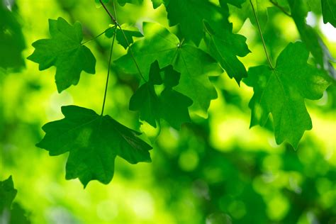 the color green why we the color green it s the color of new