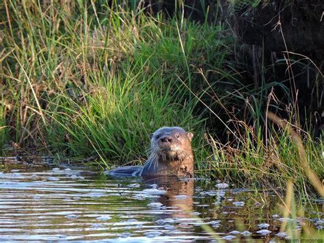 fauna de la zona sur chile en imagenes fauna de la zona sur chile en imagenes