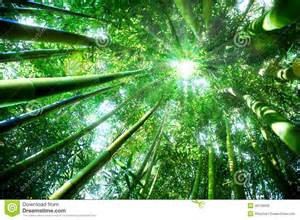 concept de zen en nature photo stock image 46108650