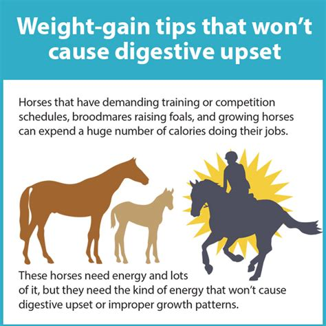 7 Things That Make Upset by Weight Gain Tips For Horses That Won T Cause Digestive