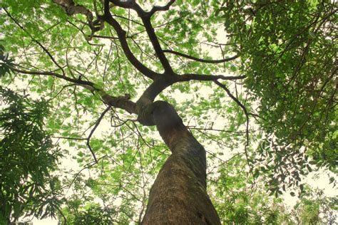 tree is up looking up the tree looking up one of the trees in the