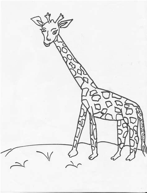 herbivorous animals coloring page herbivore animal coloring pages coloring pages