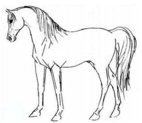 welsh pony coloring pages 320 x