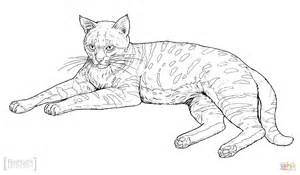 african cats coloring pages black footed cat coloring page free printable coloring pages