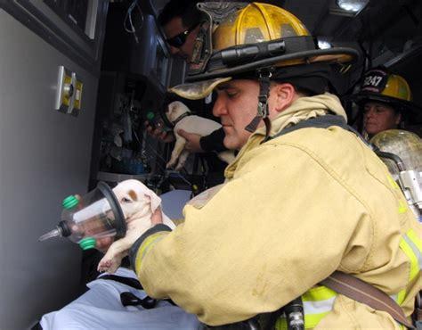 imagenes impresionantes de bomberos mira 15 impresionantes im 225 genes de bomberos rescatando
