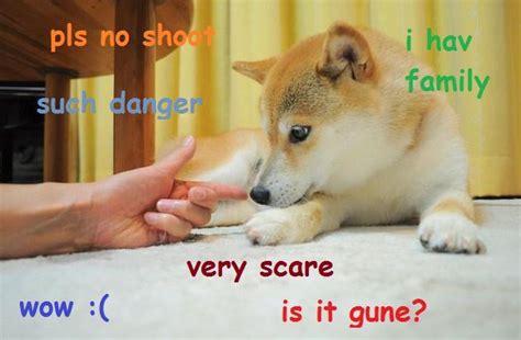 Shibe Doge Meme - 17 best images about shibe on pinterest barking jake