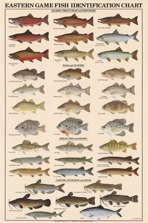 species chart freshwater fish identification chart book covers