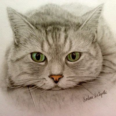 Boneka Kucing Cat 3 Colour Big Eye 9 17 Best Images About Colored And Pencil Drawings On