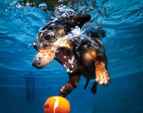 puppies underwater seth casteel s new book underwater puppies