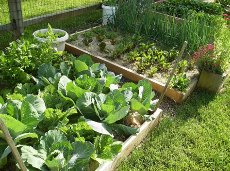 Pics Of Vegetable Gardens Beautiful Raised Bed Vegetable Garden