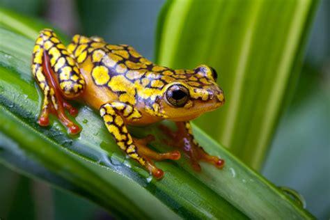imagenes animales anfibios el recinto de anfibios en panam 225 el especial