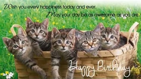 Birthday Kitties. Free Birthday Wishes eCards, Greeting