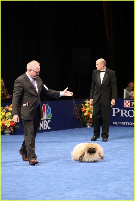 best in show sized photo of best in show purina national show 07 photo 3815150 just jared