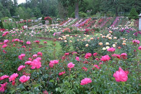 washington park international rose test garden