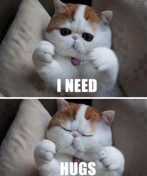Cute Cat Meme - cute cat memes tumblr image memes at relatably com