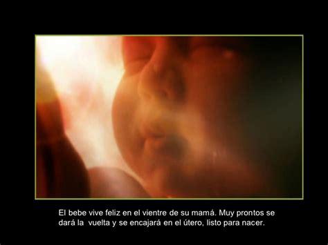 la vida fetal el el milagro de la vida