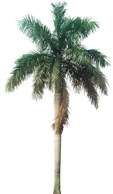 tutup kaca palm coconut trees texture