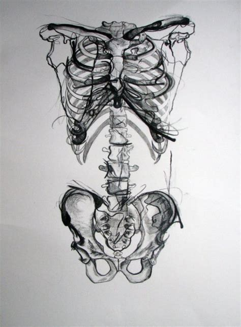 skeleton anatomy art black image 610267 on favim com