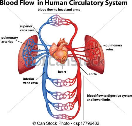 royalty free stock illustrations and photos clipart human circulatory system clipart