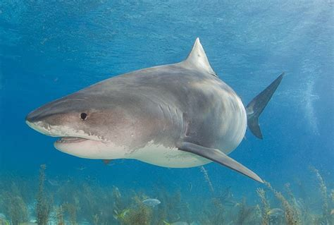 are sharks color blind sharks are colourblind animal news