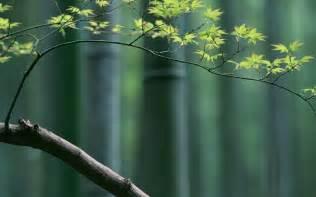 bamboo wallpaper 1920x1200 43709